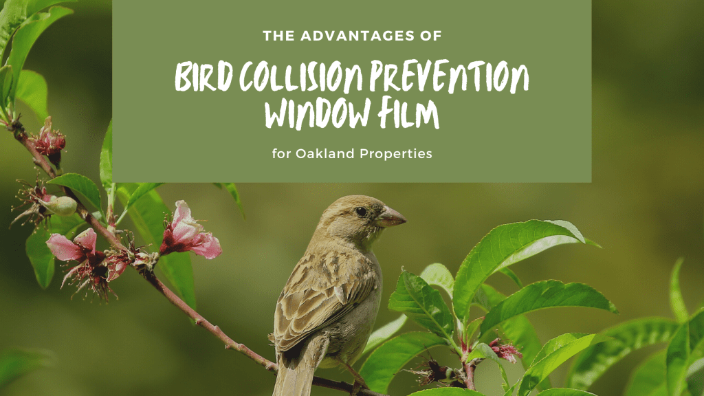 bird collision prevention window film oakland